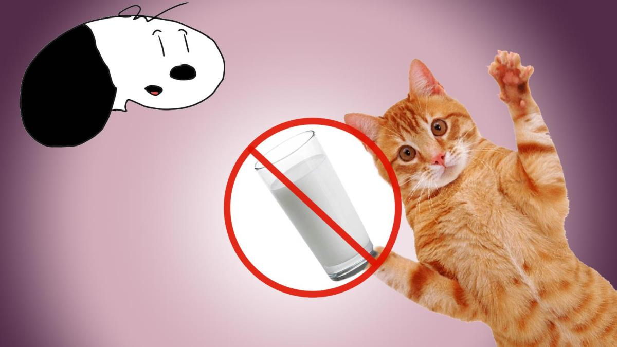 Warning: Do Not (Always) Give Your Cat Milk!